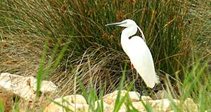Ornitologická rezervace Kolansko Blato